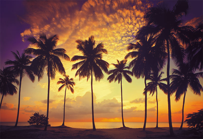 Welcome to for Beach sunset mural